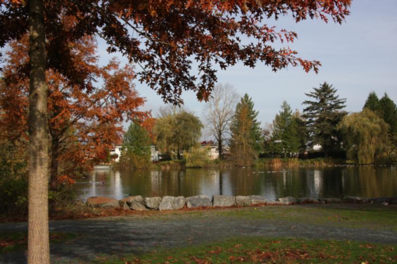 large_pond